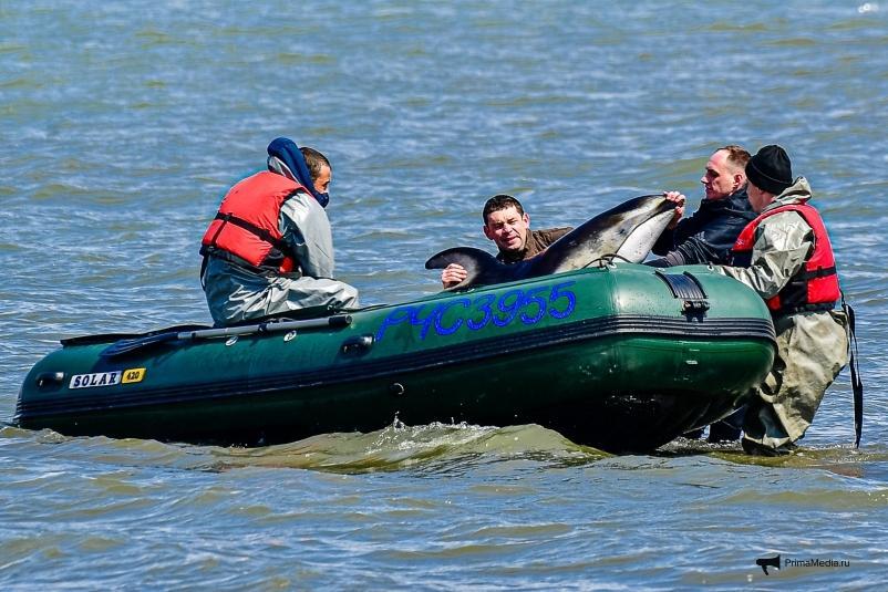 Во Владивостоке завершена спасательная операция с дельфином: как это было
