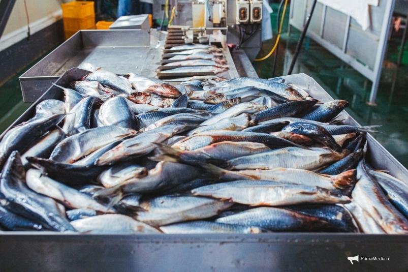 Китай не торопится принимать рыбу навалом от дальневосточных рыбаков