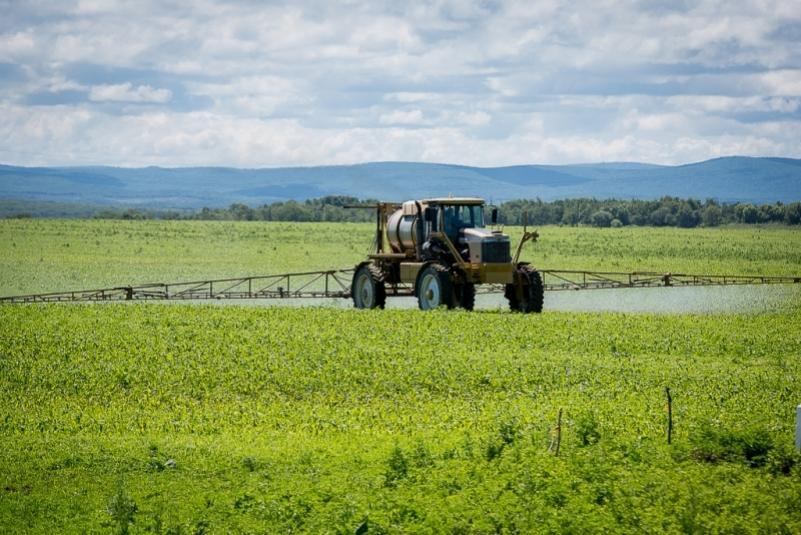 Непаханая целина: есть ли шансы у аграрного Приморья после реформы
