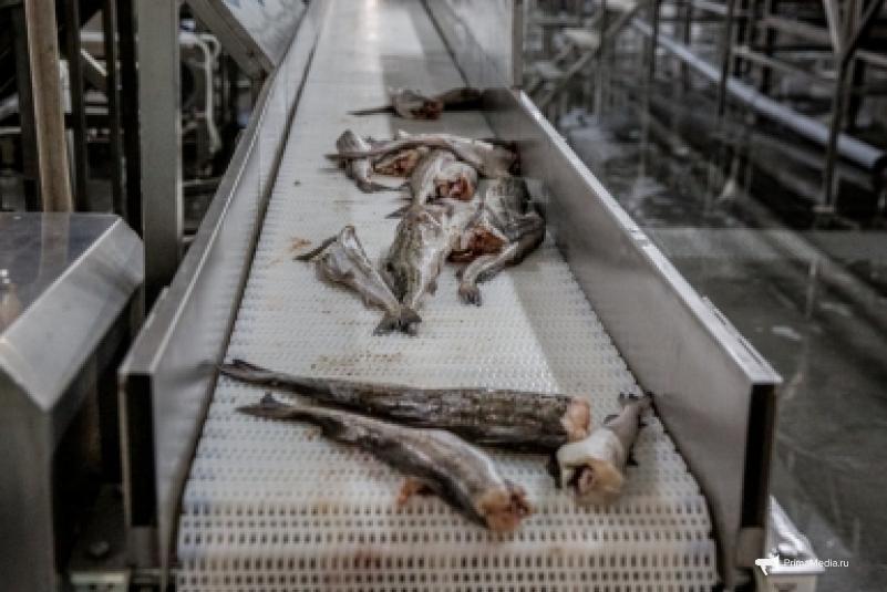Приморских рыбаков призывают вернуться в родные порты